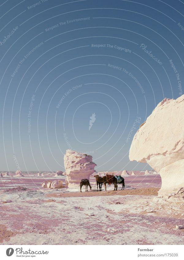 Weisse Wüste weiß blau Ferien & Urlaub & Reisen Ferne Sand Ausflug Abenteuer Tourismus Wüste Safari