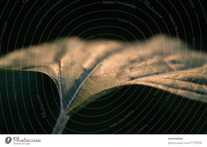 Engelsgleich Farbfoto Detailaufnahme Morgen Schwache Tiefenschärfe Bioprodukte Safari Sonne Natur Pflanze Tier Sommer Blatt Grünpflanze Nutzpflanze Park Urwald