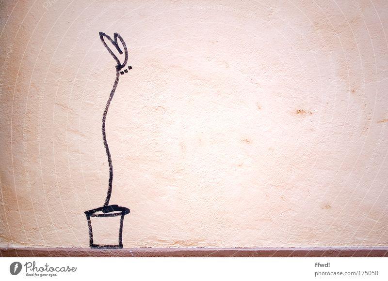 Mauerblümchen schön Blume Einsamkeit Liebe Wand Mauer Zufriedenheit Fassade Herz Fröhlichkeit einzigartig Romantik einfach Kreativität Gemälde Verliebtheit