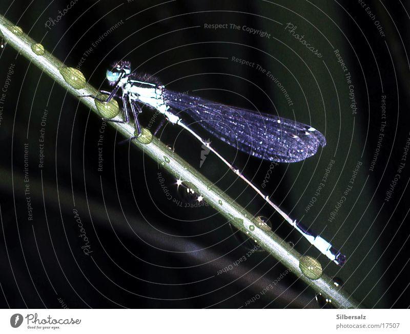 Libelle im Regen Wasser Wassertropfen