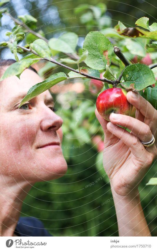 Rotbäckchen Apfel Ernährung Bioprodukte Lifestyle Gesunde Ernährung Gartenarbeit Ernte Apfelernte Frau Erwachsene Leben Gesicht Hand 1 Mensch 30-45 Jahre Natur