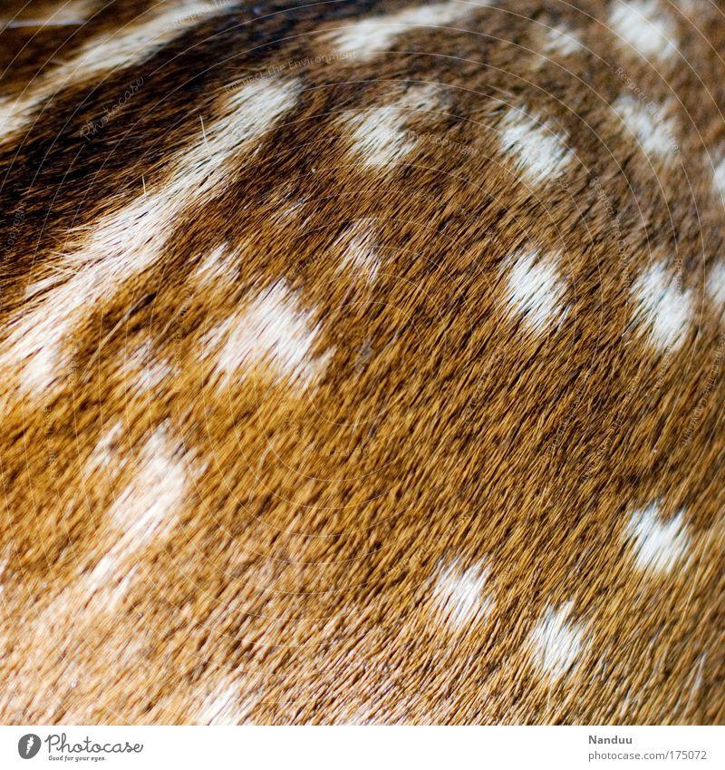 Punktestand (>400) Natur Tier Wärme Tierjunges Hintergrundbild Wildtier wild Beginn weich Fell Punkt Jagd Umweltschutz Rehkitz