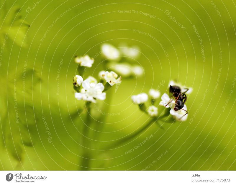 Pollenfresser Natur weiß grün Pflanze schwarz Tier Blüte Umwelt Wachstum natürlich Blühend Wildtier niedlich genießen Fressen Umweltschutz