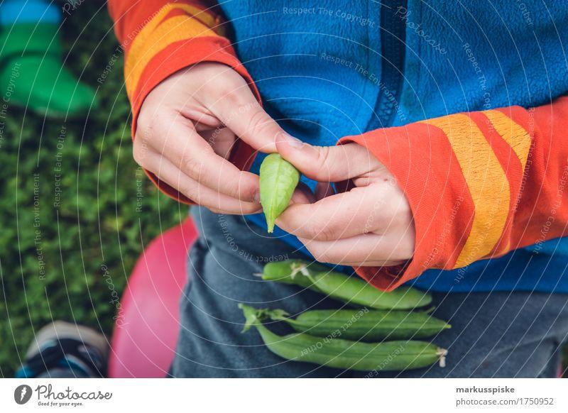 frische bio erbsen ernte Mensch Kind Pflanze Gesunde Ernährung Hand Freude Essen Gesundheit Junge Glück Garten Lebensmittel Freizeit & Hobby Körper