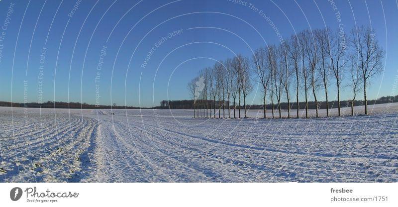 pano mit pappeln Baum blau Winter Pappeln