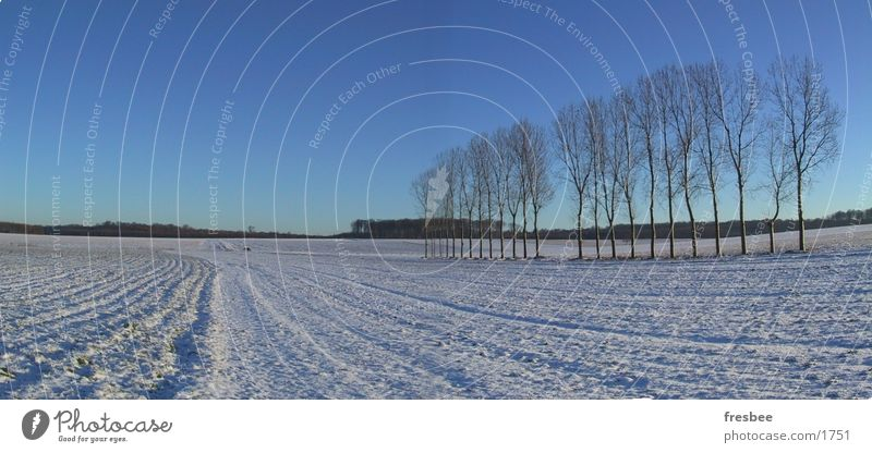 pano mit pappeln Pappeln Baum Winter blau