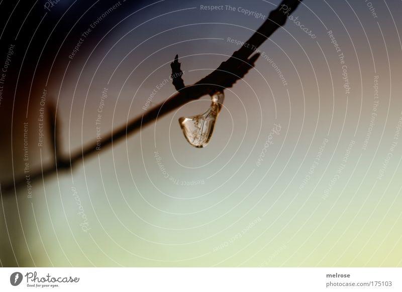 little drop Natur Wasser ruhig Einsamkeit Leben kalt Erholung Glück träumen Traurigkeit Zufriedenheit Stimmung Wassertropfen Perspektive Hoffnung einzigartig