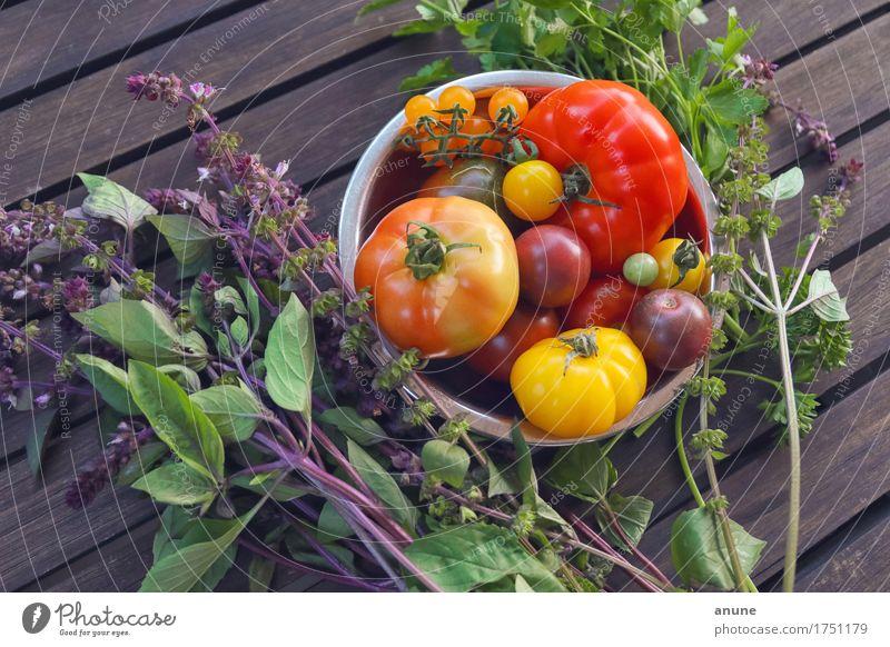Tomatenallerlei mit frischen Kräutern Natur Sommer Gesunde Ernährung Foodfotografie natürlich Gesundheit Holz Garten Lebensmittel Häusliches Leben Tisch
