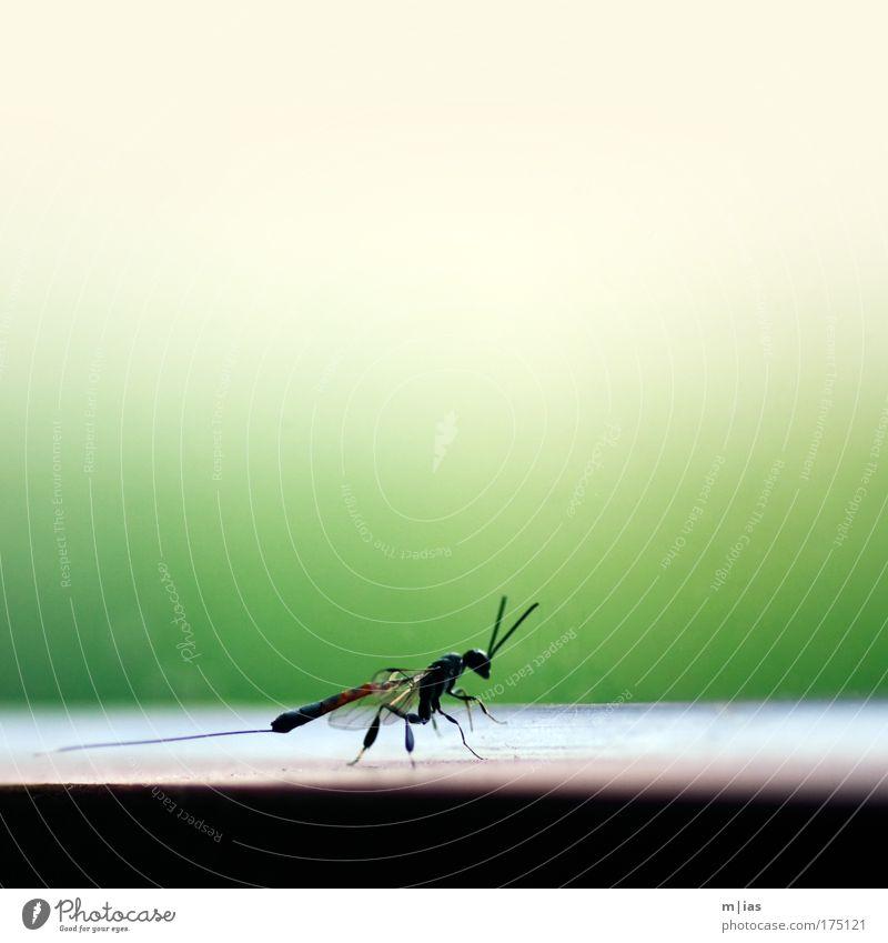 auf Patrouille Natur Tier Kraft fliegen außergewöhnlich stehen Sicherheit bedrohlich Vergänglichkeit beobachten Schutz nah Insekt entdecken Mut Wachsamkeit