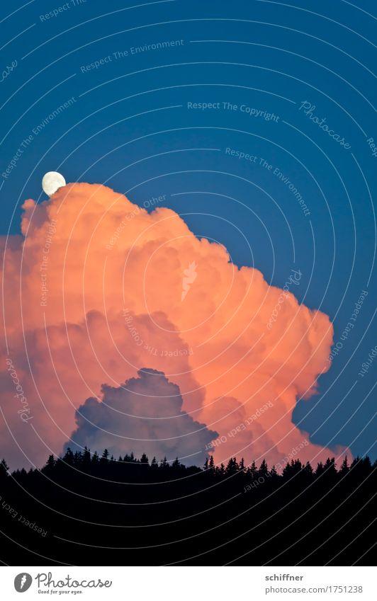 überwacht | vom Mond Umwelt Natur Landschaft Himmel Wolken Gewitterwolken Sonnenaufgang Sonnenuntergang Wetter Schönes Wetter schlechtes Wetter Wald