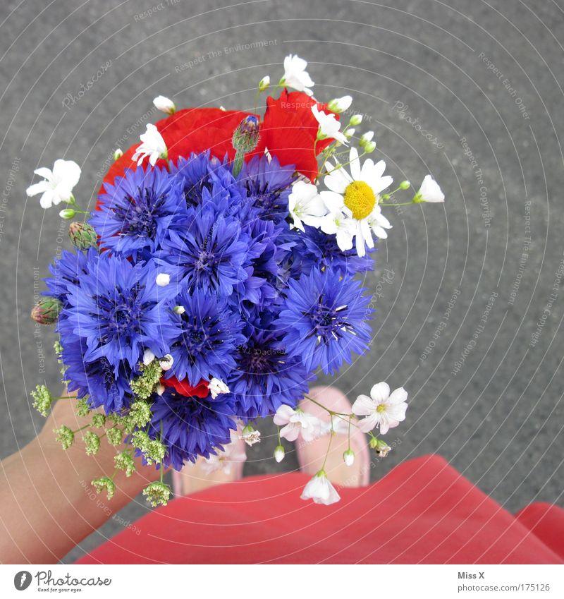 Brautjungfer Frau Mensch Hand Blume Freude Erwachsene Liebe Gefühle Garten Fuß Feste & Feiern Geburtstag Ausflug frisch Fröhlichkeit Hoffnung