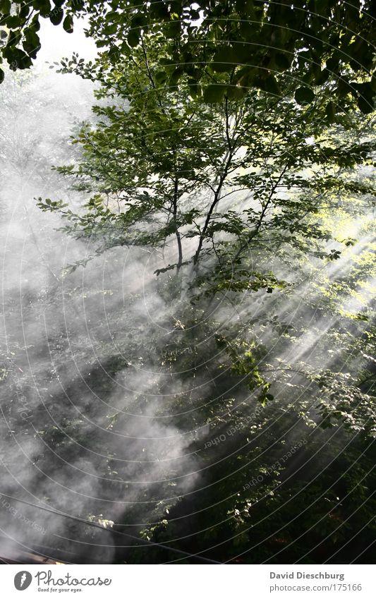 Im Zauberwald Farbfoto Außenaufnahme Textfreiraum unten Morgen Morgendämmerung Tag Dämmerung Licht Schatten Kontrast Lichterscheinung Sonnenlicht Sonnenstrahlen