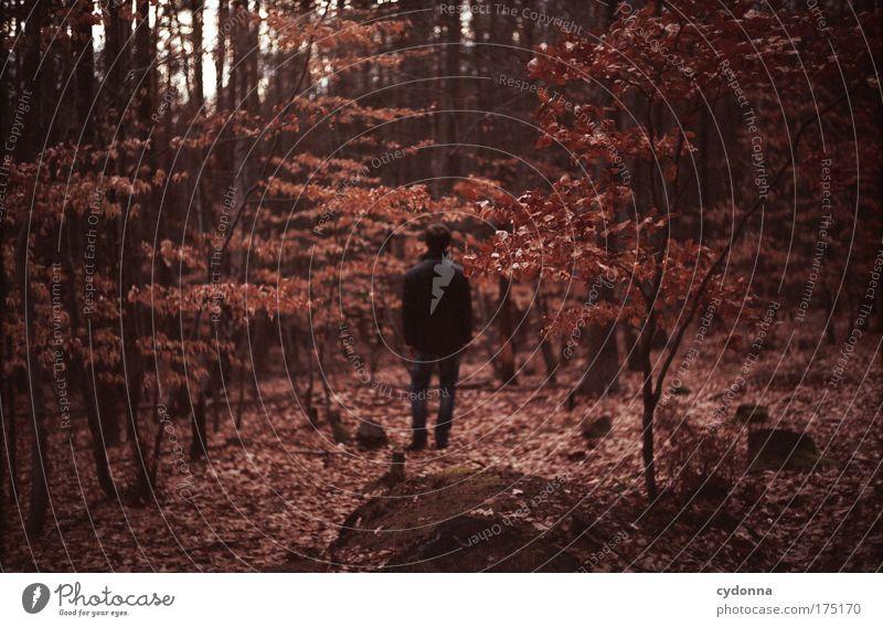 SILENCE Mensch Mann Natur Baum Blatt Einsamkeit ruhig Farbe Erwachsene Wald Herbst Leben Umwelt Landschaft Gefühle Freiheit