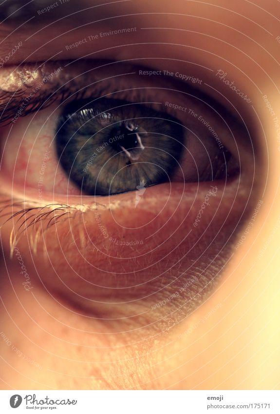 Stalker Farbfoto Nahaufnahme Detailaufnahme Makroaufnahme Blick in die Kamera maskulin Auge Regenbogenhaut Pupille