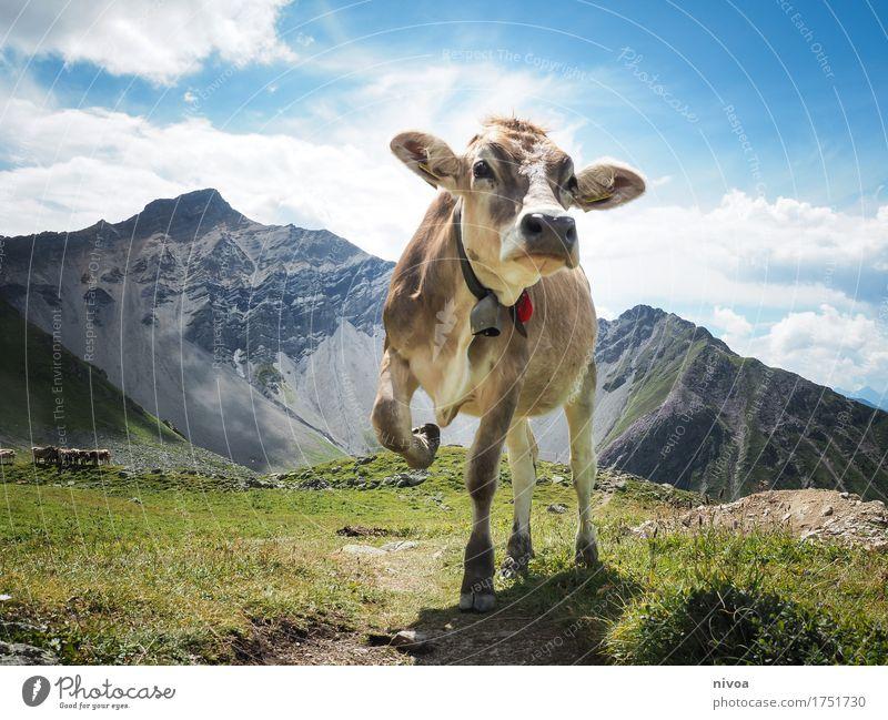 Schweizer Kuhmodel Käse Joghurt Milcherzeugnisse wandern Yoga Umwelt Natur Landschaft Pflanze Tier Erde Himmel Wolken Sonne Sonnenlicht Sommer Wetter