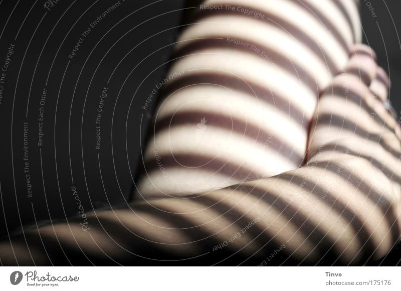 beinhalten Hand schön Erholung feminin Gefühle Beine Zufriedenheit Arme Haut liegen berühren genießen Lust exotisch gestreift Akt