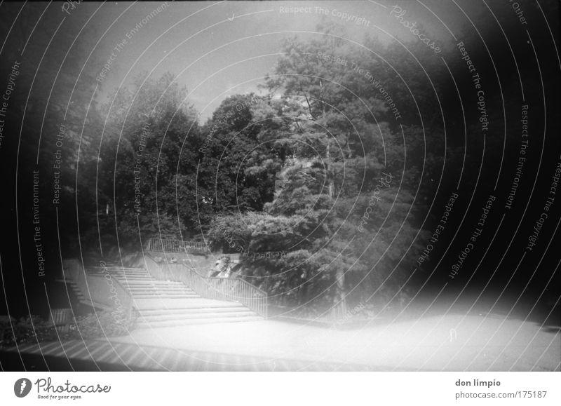 park Sommer ruhig schwarz Wald Garten grau Park Nebel Treppe Hügel Surrealismus