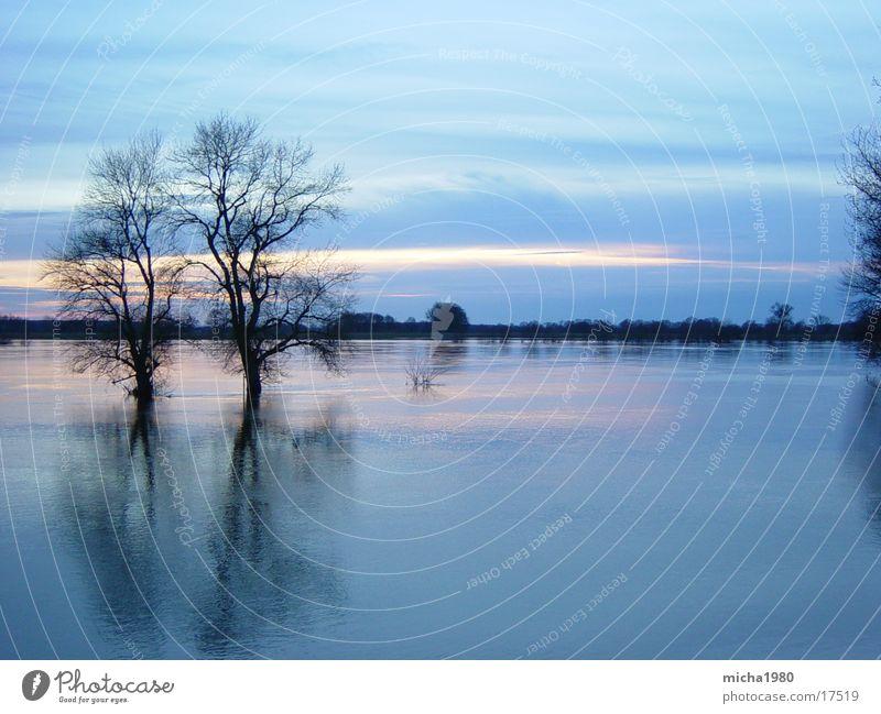 ruhiger Fluss Wasser Baum Elbe