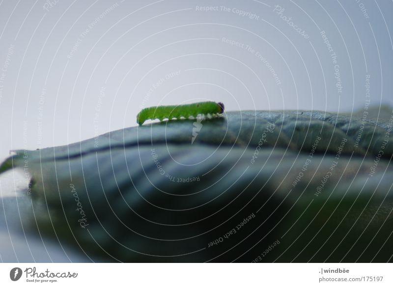 Wellentanz grün weiß Tier schwarz Einsamkeit Leben Bewegung klein Zufriedenheit laufen natürlich Wildtier Wachstum authentisch niedlich Neugier