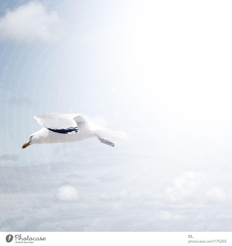 möwe Himmel Natur blau weiß Ferien & Urlaub & Reisen Sonne Sommer Tier Wolken Ferne Umwelt Landschaft Freiheit Vogel Wind Wildtier
