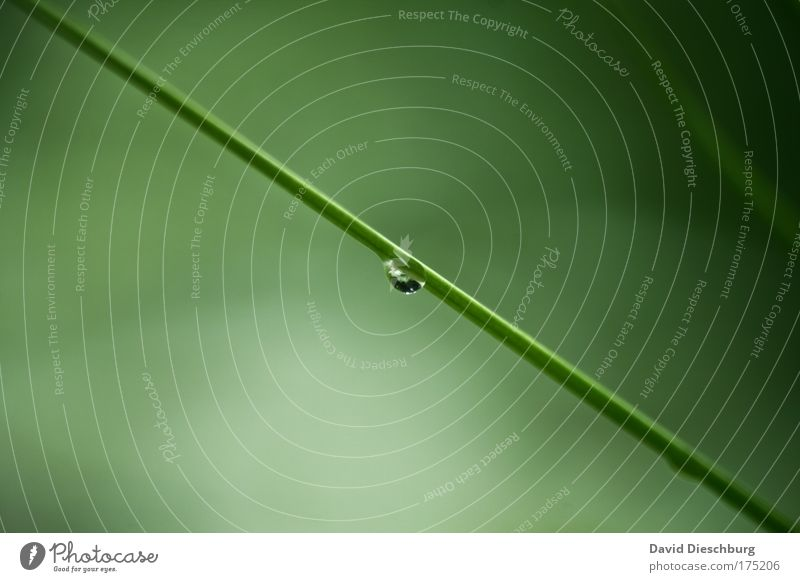 Lonely tear Natur grün Sommer Pflanze Umwelt Gras Frühling Linie Klima natürlich nass Wassertropfen Sträucher einzigartig Tropfen Makroaufnahme