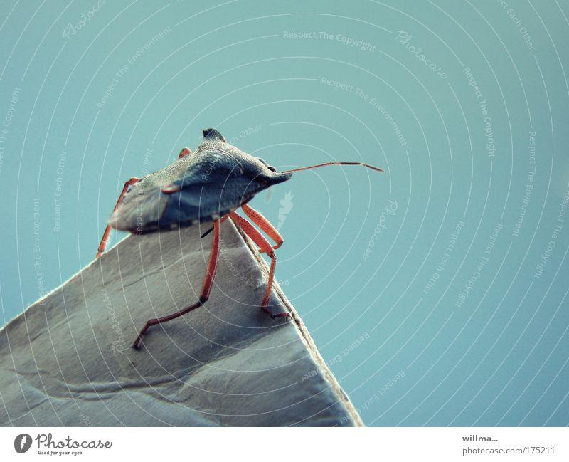Bergsteigerglück einer Wanze Mut Fernweh Angst Erfolg anstrengen Sicherheit Insekt Aussicht Karriere Risiko Spitze ganz oben Überwachung Überblick Übersicht