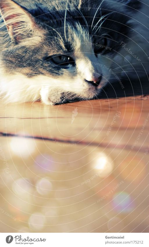 Sommer Royal Farbfoto mehrfarbig Innenaufnahme Licht Schatten Kontrast Reflexion & Spiegelung Lichterscheinung Sonnenlicht Sonnenstrahlen Tierporträt Haustier