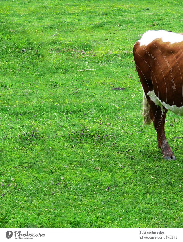 Steak, englisch Kuh Bulle Rind Alm Weide Bauernhof Nutztier weiden Gras Wiederkäuer Fressen biologisch Natur Glück Kalb Hälfte Hinterteil gefleckt Vieh grün