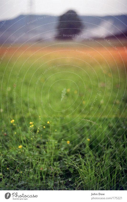 Landluft Natur Baum grün Sommer Wiese Gras Berge u. Gebirge träumen Landschaft Feld Umwelt ästhetisch natürlich Idylle Hügel Blühend