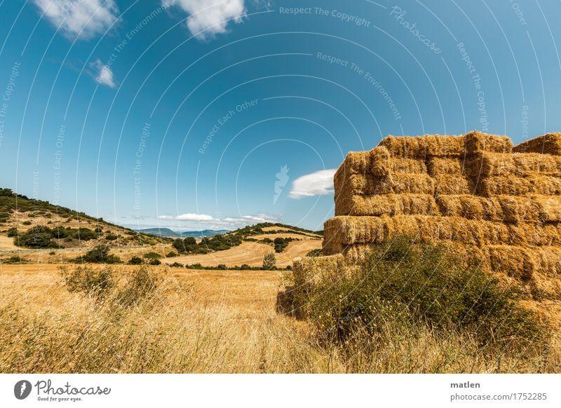 Jahreszeitenbild Landschaft Himmel Wolken Horizont Sommer Wetter Schönes Wetter Pflanze Gras Nutzpflanze Feld Hügel blau braun gelb grün weiß Ernte Stroh