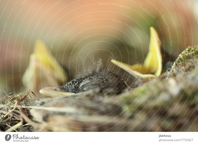 \/_\/ Natur Tier Tierjunges Umwelt Gefühle Liebe klein Glück Lebensmittel Vogel Ernährung offen Wildtier Warmherzigkeit Schutz Sicherheit