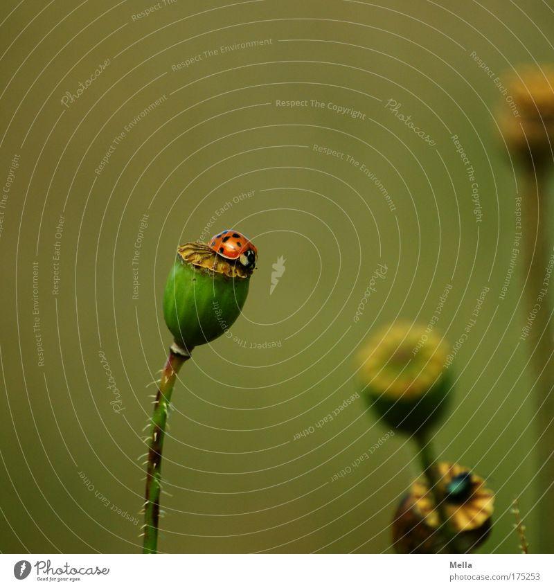 Obenauf Natur Blume grün Pflanze Sommer ruhig Tier Herbst Wiese Glück Park Stimmung braun Feld Umwelt sitzen