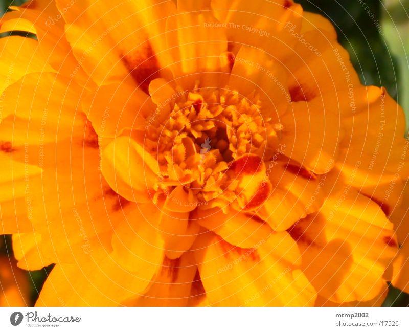 Blüte 02 Sommer Natur Detailaufnahme