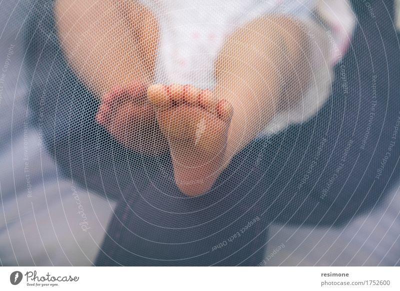 Neugeborene Füße, die ein Moskitonetz drücken schön Körper Haut Pediküre Leben Kind Mensch Baby Mädchen Kindheit Fuß Liebe klein neu niedlich weich reizvoll