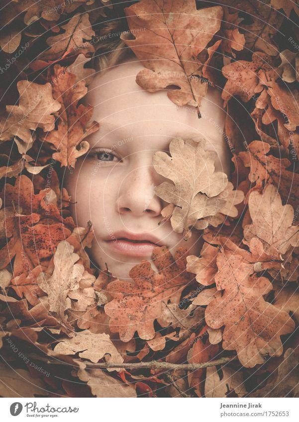 Im Herbst Natur Stadt Pflanze Blatt Gesicht Umwelt Wärme Herbst Junge träumen Kindheit Klima beobachten Schutz Jahreszeiten Vertrauen