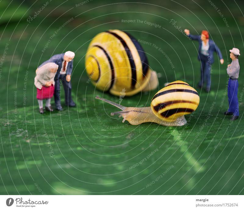 Miniwelten - Schnecken Endspurt Fleisch Ernährung Mensch maskulin feminin Mann Erwachsene Großvater Großmutter 4 Tier Wildtier 2 gelb grün geduldig Neugier