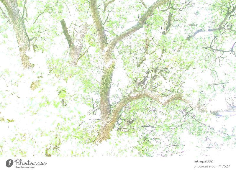 Äste im Gegenlicht 01 Baum Sonne Sommer Ast Reaktionen u. Effekte