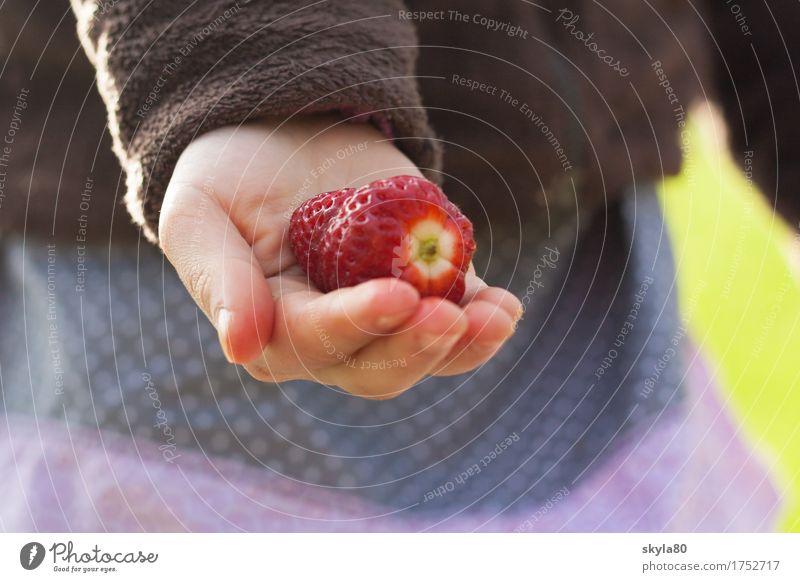 Muntermacher Erdbeeren Hand Kinderhand Ernte Frucht anbieten Erntedankfest teilen geben Ernährung Lebensmittel vegetarische Ernährung Bioprodukte frisch lecker