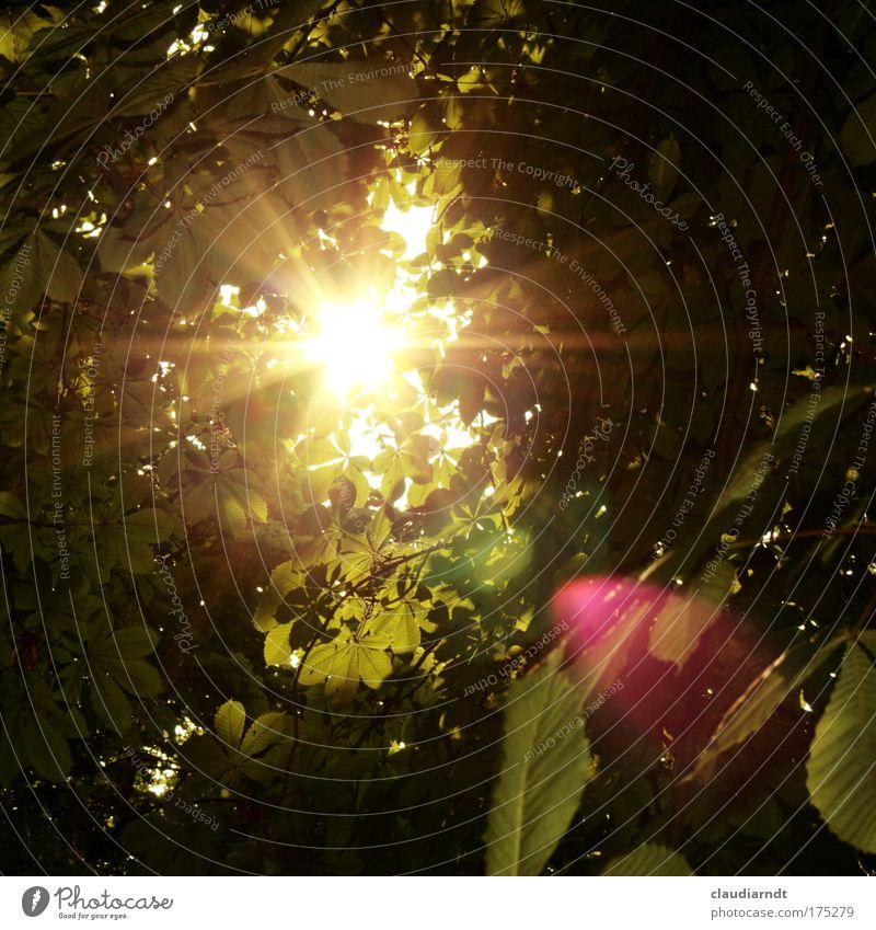 soleil Natur schön Baum Sonne grün Sommer Blatt gelb Leben Erholung träumen Wärme rosa Energie leuchten genießen