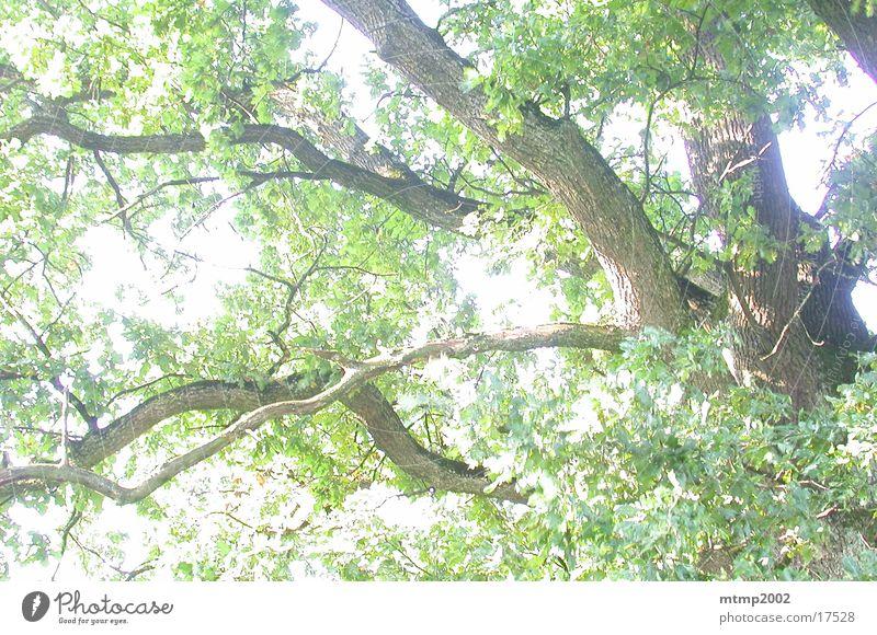Äste im Gegenlicht 02 Baum Sommer Ast Sonne Reaktionen u. Effekte