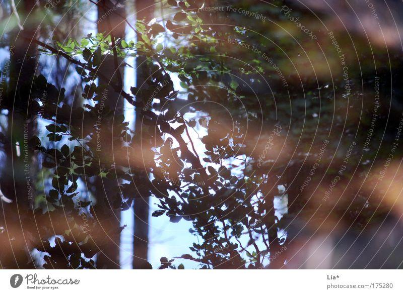 mirror Natur Baum Pflanze Blatt Wald Umwelt Pfütze Lichtspiel Umweltschutz Spiegelbild