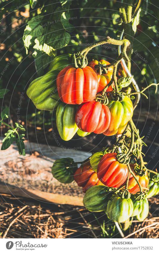 Ochsenherz Tomaten in Garten Natur Gesunde Ernährung Leben Design Gemüse Bioprodukte Vitamin Beet