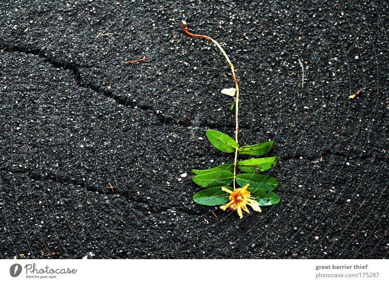 Schwere Blume Natur Pflanze Umwelt lustig einzigartig Vergänglichkeit Schmerz Inspiration Optimismus Altstadt Grünpflanze Kleinstadt