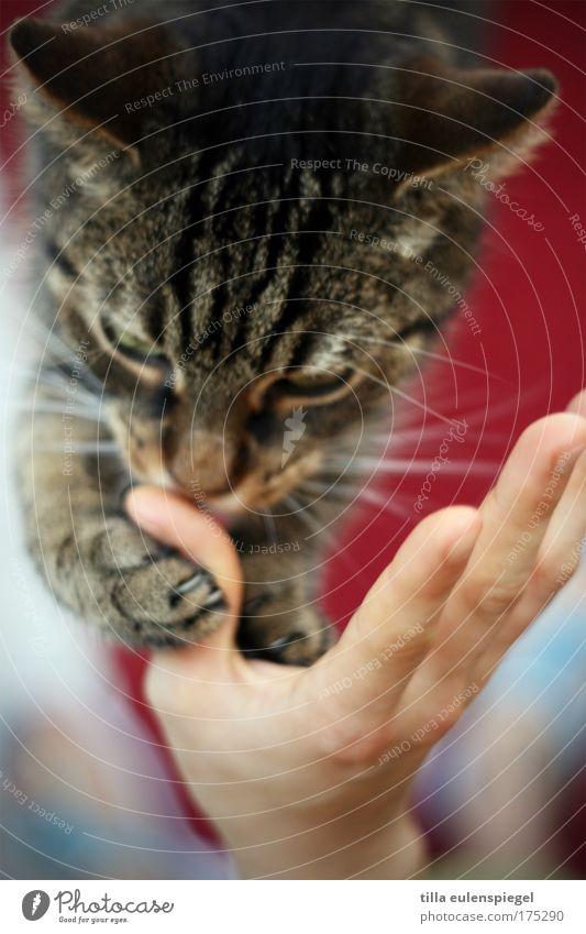 hello kitty Katze Hand rot Tier Finger Partnerschaft Fressen Haustier Pfote Mensch füttern Futter