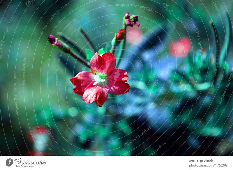 Sommerzeit Natur Sonne Blume grün blau Pflanze rot Leben Blüte Gras Frühling Feste & Feiern rosa Umwelt Sträucher