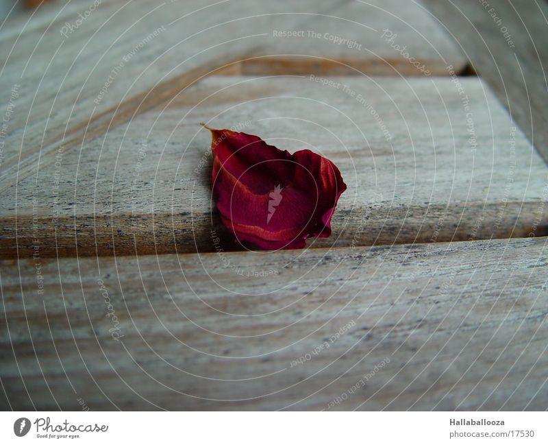 the last leaf Blatt Tod Rose mögen