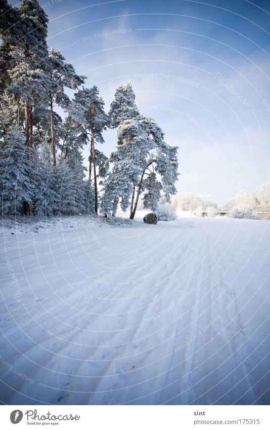 neuschnee Natur Himmel weiß Baum blau Winter ruhig Wolken Straße Wald kalt Schnee Erholung Wege & Pfade Landschaft Eis