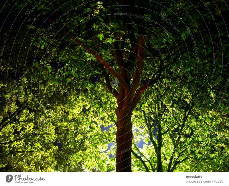 Nachtstimmung Natur Baum grün Sommer Blatt Einsamkeit Tier Freiheit Glück Park Landschaft Zufriedenheit Stimmung braun Umwelt Fröhlichkeit