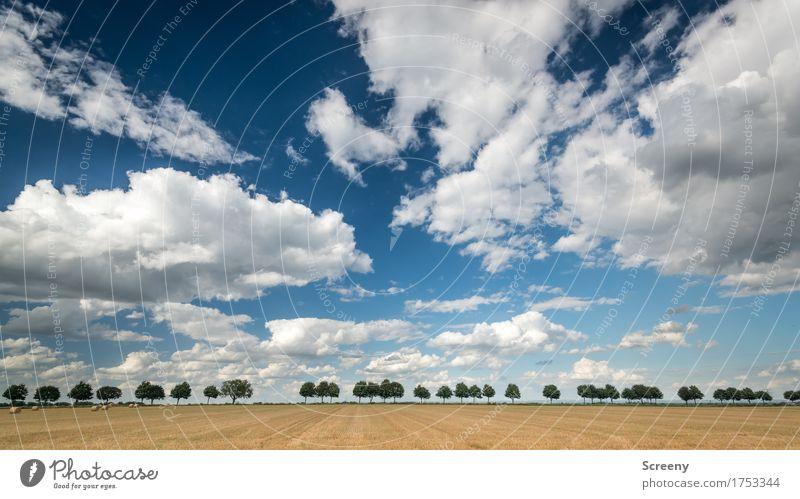 Landstraße Natur Landschaft Pflanze Himmel Wolkenloser Himmel Sommer Herbst Wetter Schönes Wetter Baum Feld ruhig Wege & Pfade Farbfoto Außenaufnahme