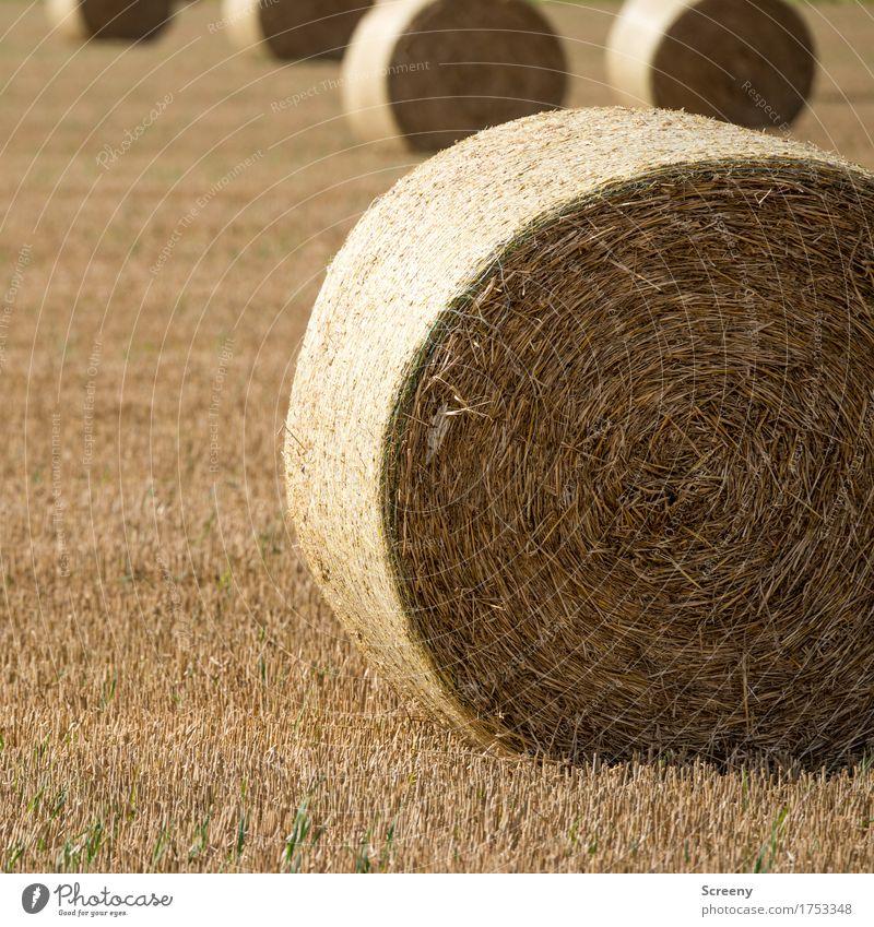 Rollin' Natur Landschaft Erde Sommer Herbst Schönes Wetter Feld Dorf rund braun gelb Heuballen Strohballen Landwirtschaft Farbfoto Außenaufnahme Menschenleer